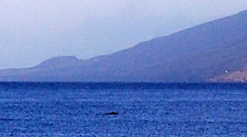 Kihei early am whale blob1
