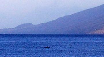 Kihei early am whale blob1